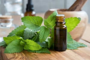 The Top 10 Proven Benefits and Uses of Lemon Balm