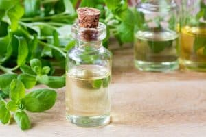 wellnessaromas-aromatherapy-essential-oil_sweet-marjoram-benefits-uses